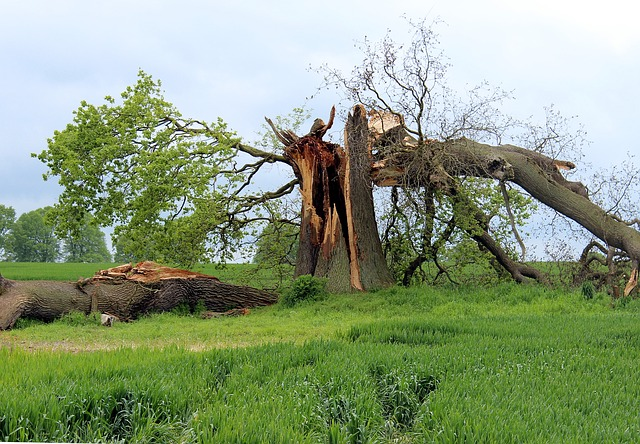 Prevent Storm Damage with ABCO Restoration