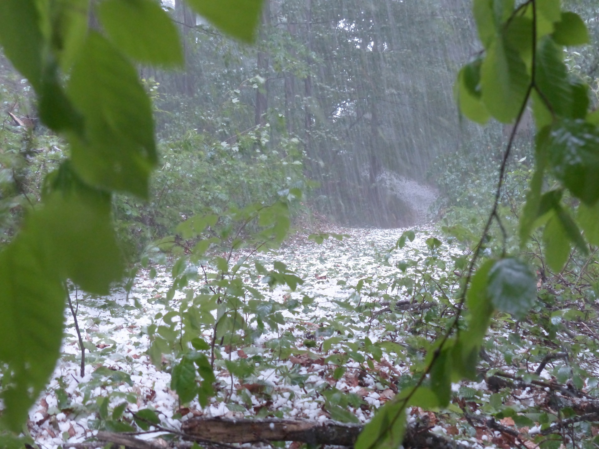 This article covers the next steps after hail storm damage